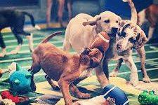 Super Bowl vs. Puppy Bowl