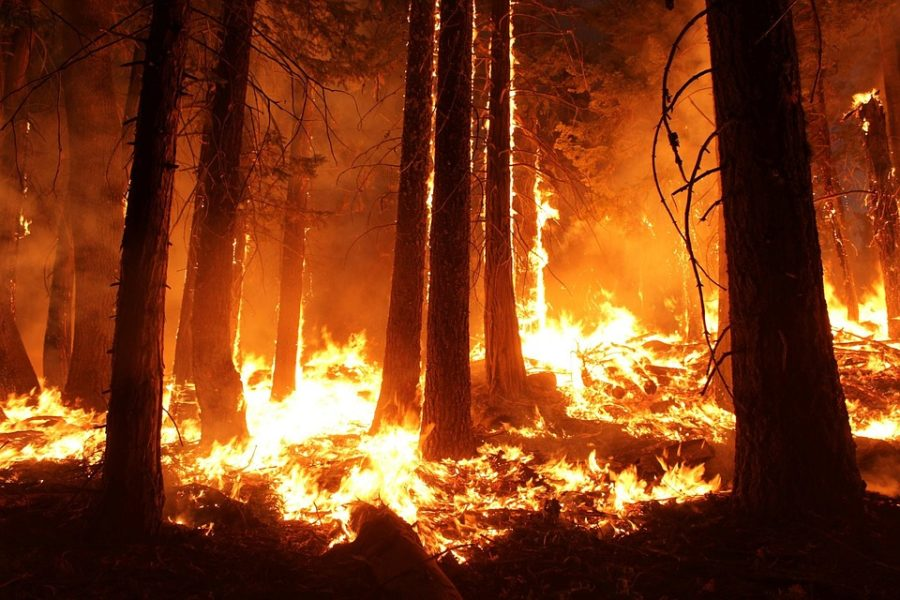 As the Amazon burns, we are left wondering how this will affect our future.