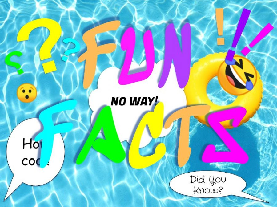 Summer Fun Facts Pic