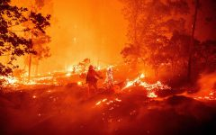 Forest Fires on the West Coast Breaking Records